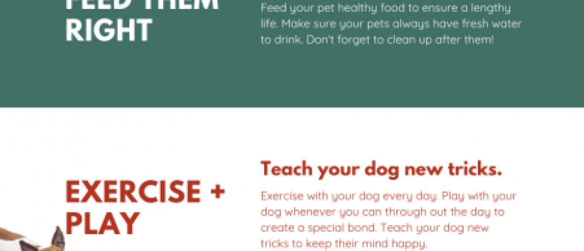 How to be a Responsible Dog Owner Infographic (1)