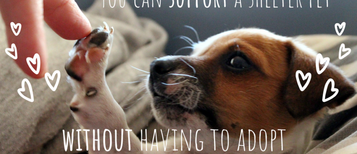 support a shelter pet